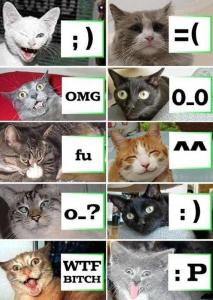 Emoticons explained with pictures of cats